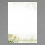 Weiße Rosen DIN A4 100 Blatt