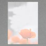 Roter Mohn DIN A4 100 Blatt