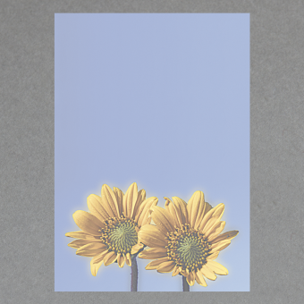 Sonnenblumen DIN A4