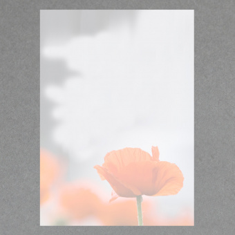 Roter Mohn A4