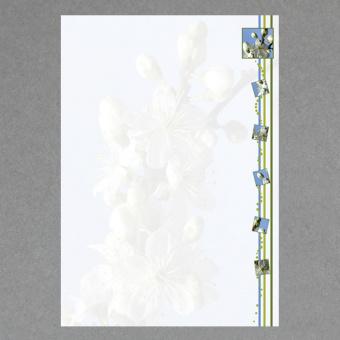Frühlingsblüten A4