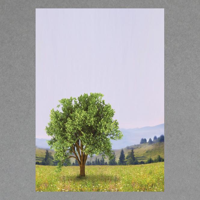 Baum A4