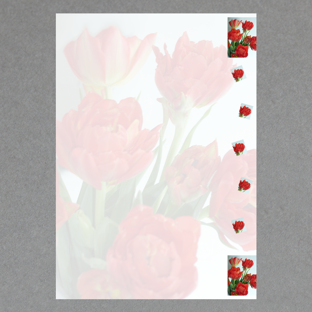 Papier Direkt Shop Dream Of Flowers A4 Purchase Online