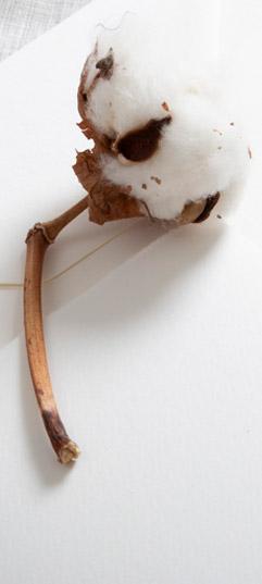 carta-bianca-e-colorata-naturale